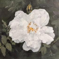 'Stanwell Perpetual rose' (2), 15 x 15 cm, akryl på maleplate, 2015, Kr 800,-